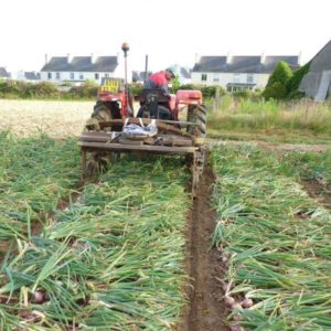 Culture tracteur Oignon de Roscoff